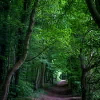 A long, green tunnel.